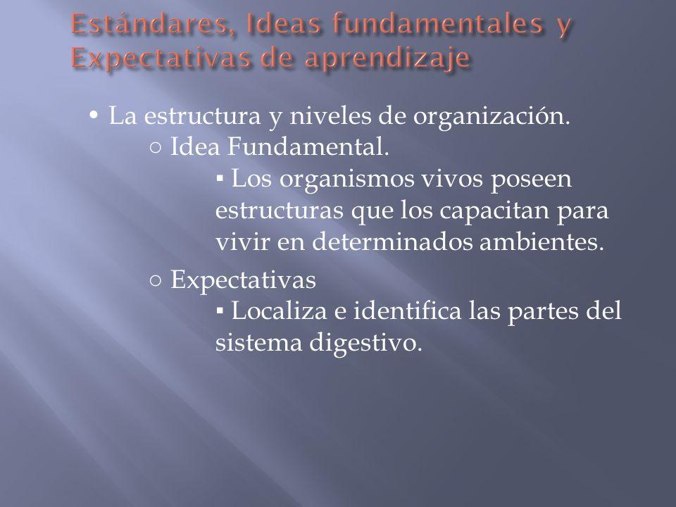 Estándares, Ideas fundamentales y Expectativas de aprendizaje