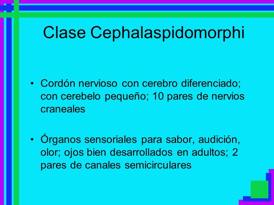 Clase Cephalaspidomorphi