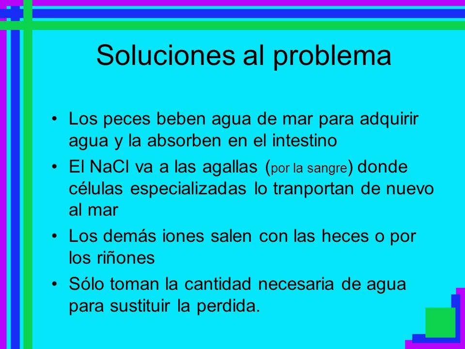 Soluciones al problema