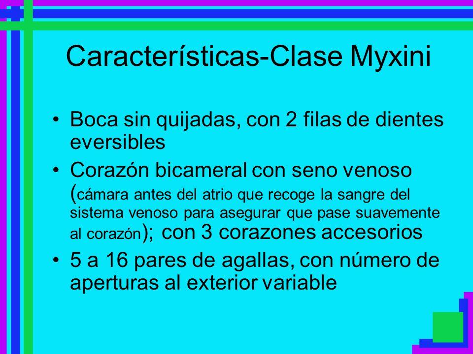 Características-Clase Myxini