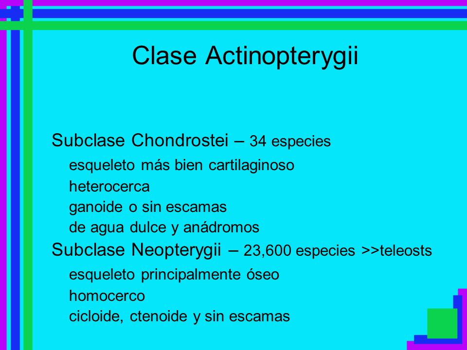 Clase Actinopterygii Subclase Chondrostei – 34 especies