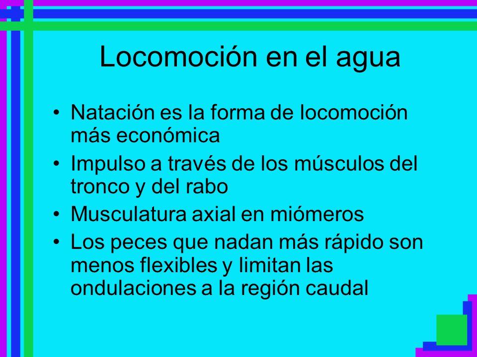 Locomoción en el agua Natación es la forma de locomoción más económica