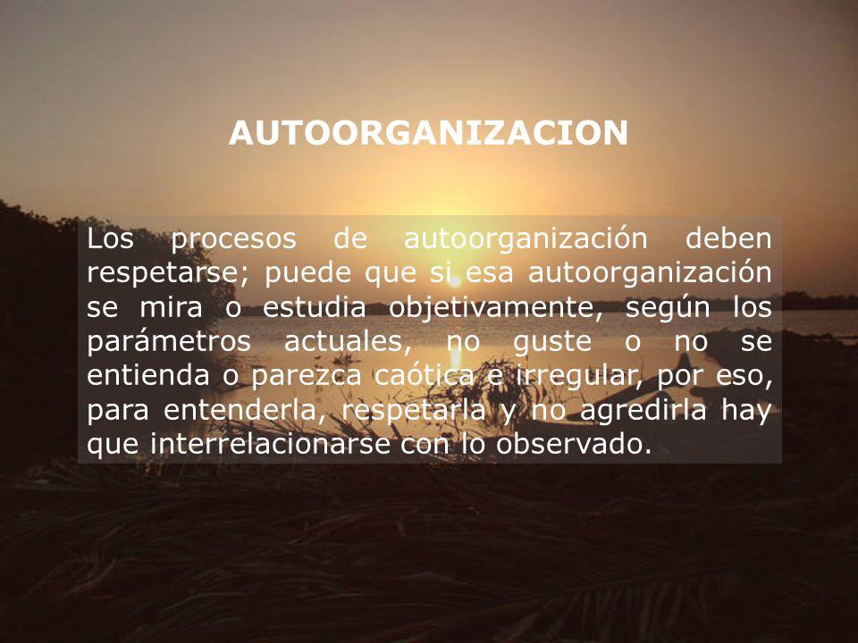 AUTOORGANIZACION