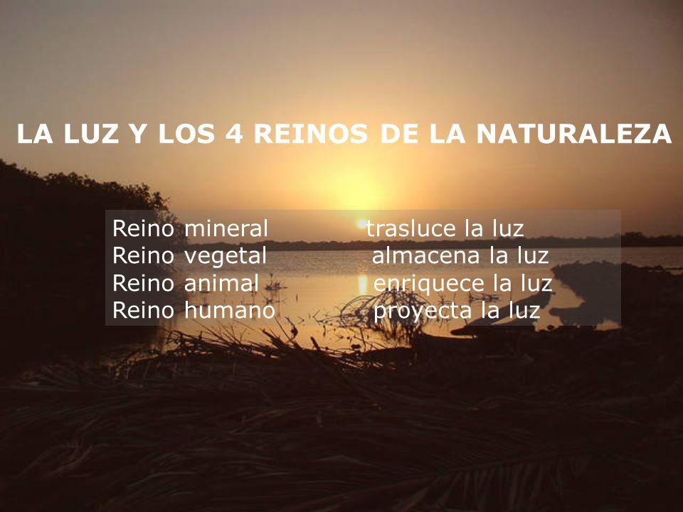 LA LUZ Y LOS 4 REINOS DE LA NATURALEZA