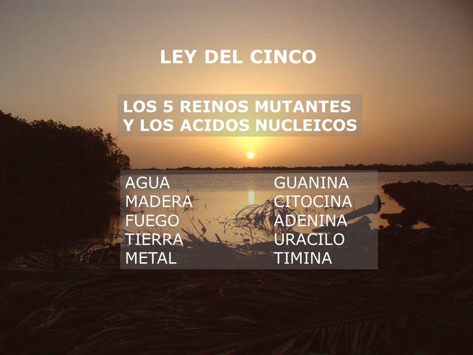 LEY DEL CINCO LOS 5 REINOS MUTANTES Y LOS ACIDOS NUCLEICOS