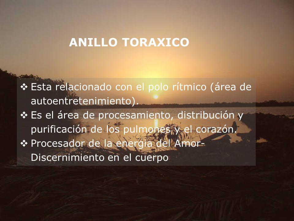 ANILLO TORAXICO Esta relacionado con el polo rítmico (área de autoentretenimiento).
