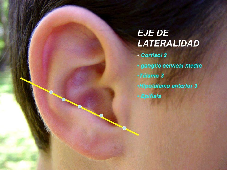 EJE DE LATERALIDAD Cortisol 2 ganglio cervical medio Tálamo 3