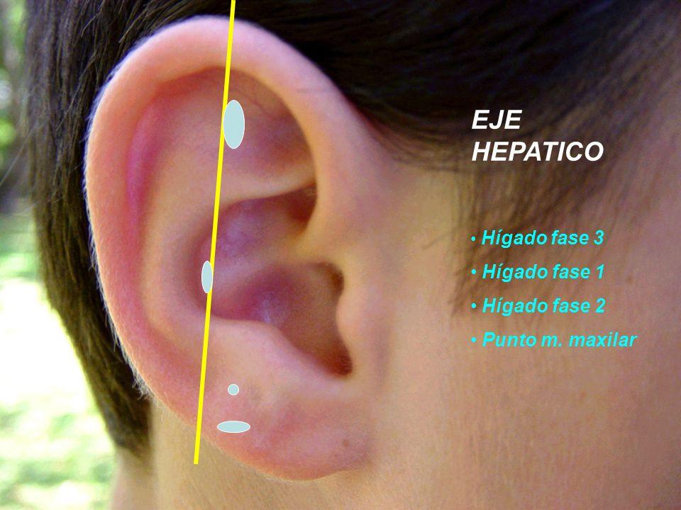EJE HEPATICO Hígado fase 1 Hígado fase 2 Punto m. maxilar