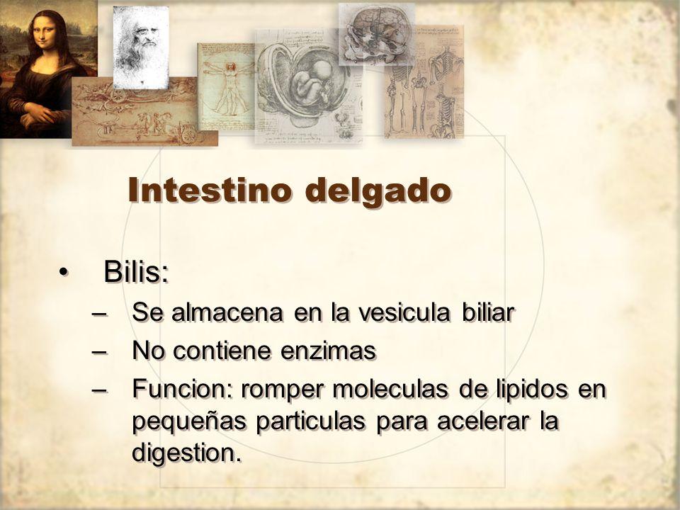 Intestino delgado Bilis: Se almacena en la vesicula biliar