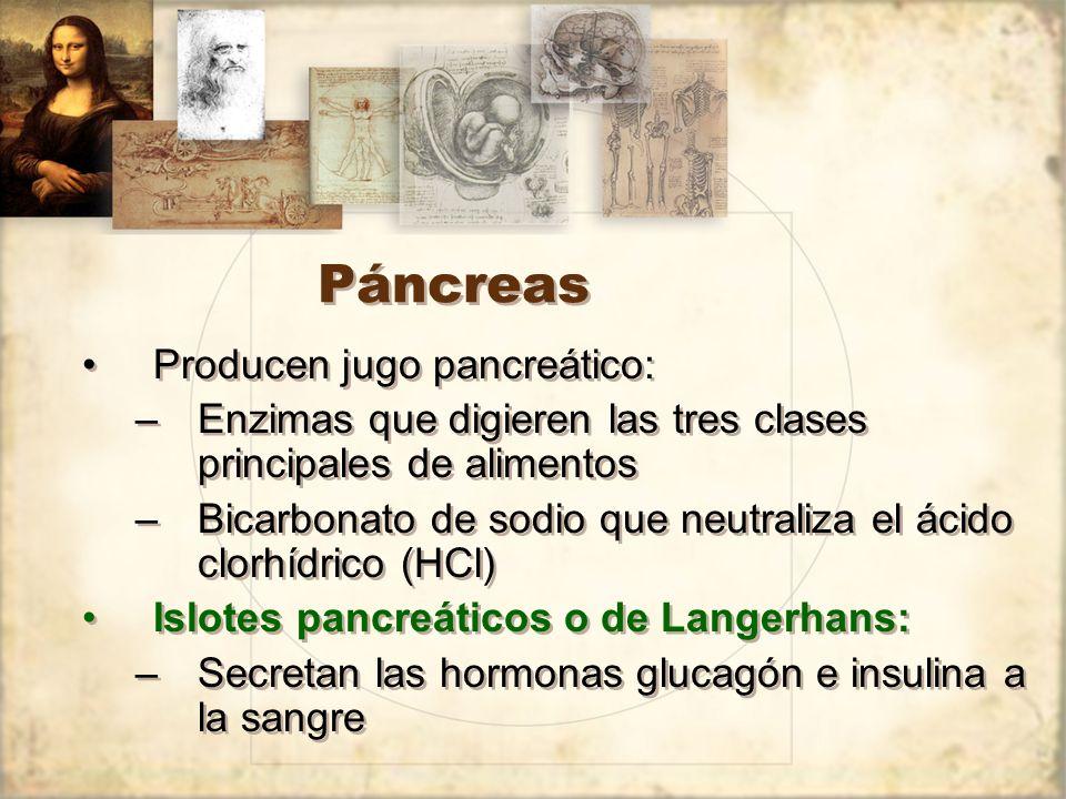 Páncreas Producen jugo pancreático: