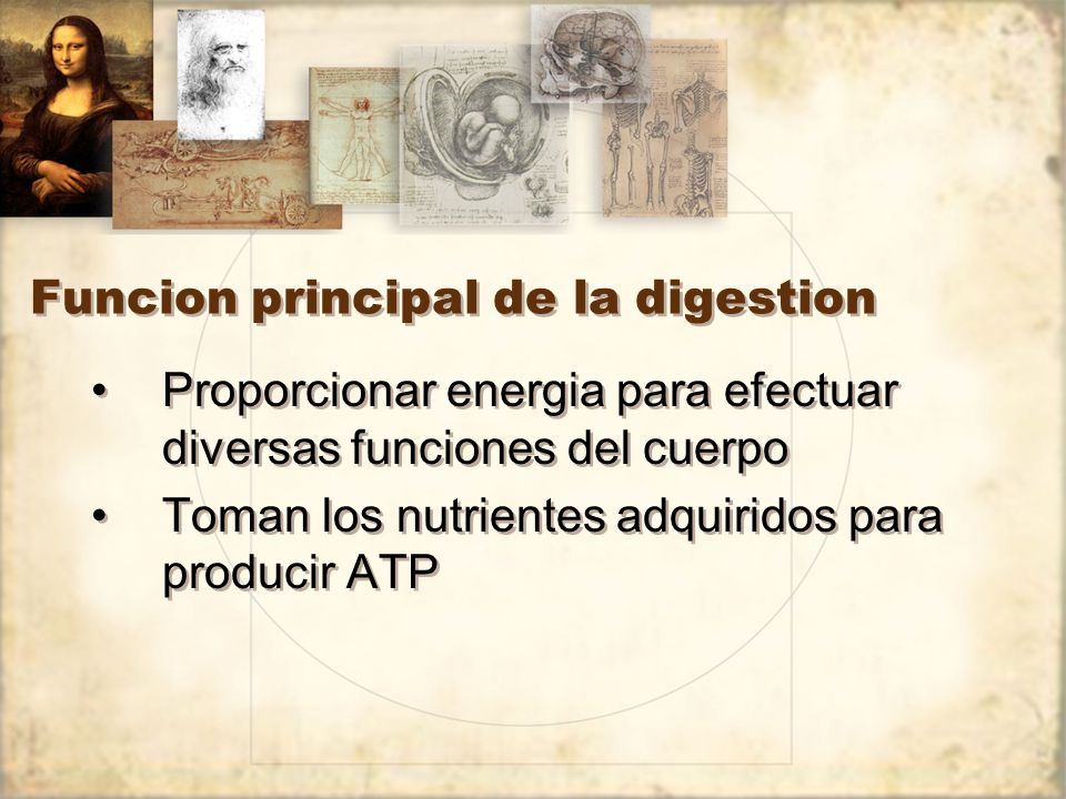 Funcion principal de la digestion