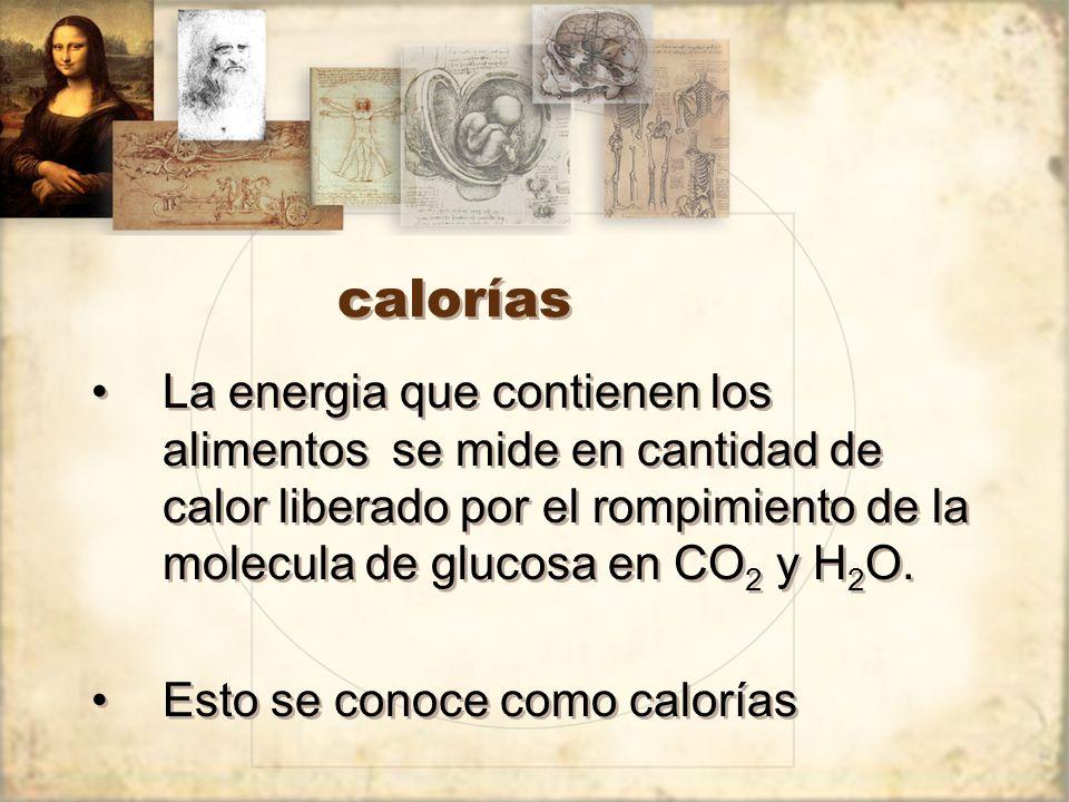 calorías La energia que contienen los alimentos se mide en cantidad de calor liberado por el rompimiento de la molecula de glucosa en CO2 y H2O.