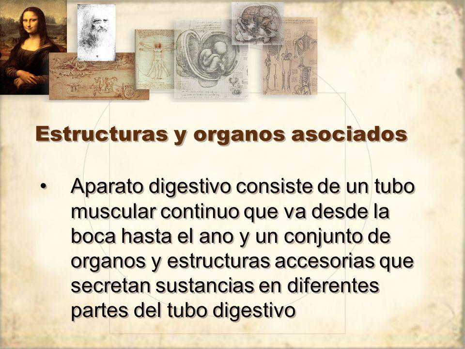 Estructuras y organos asociados
