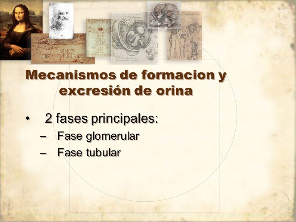 Mecanismos de formacion y excresión de orina