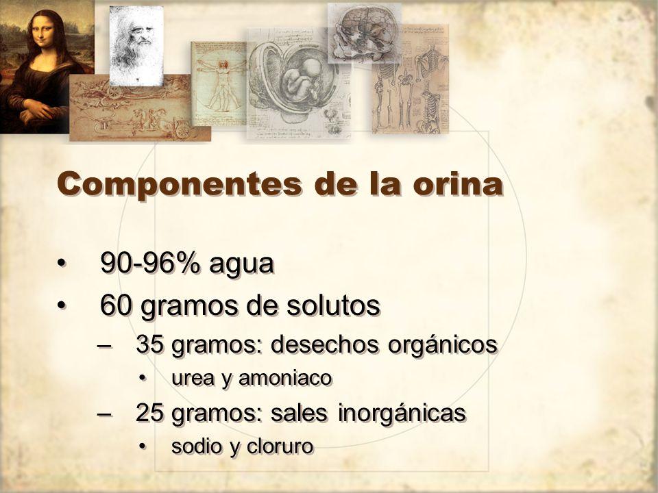 Componentes de la orina
