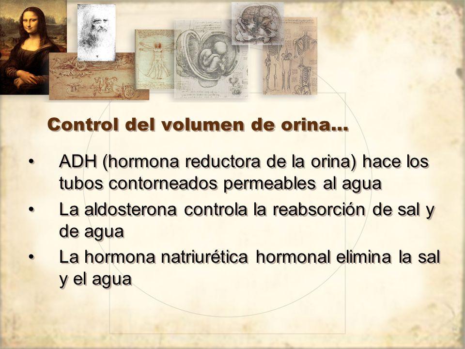 Control del volumen de orina…