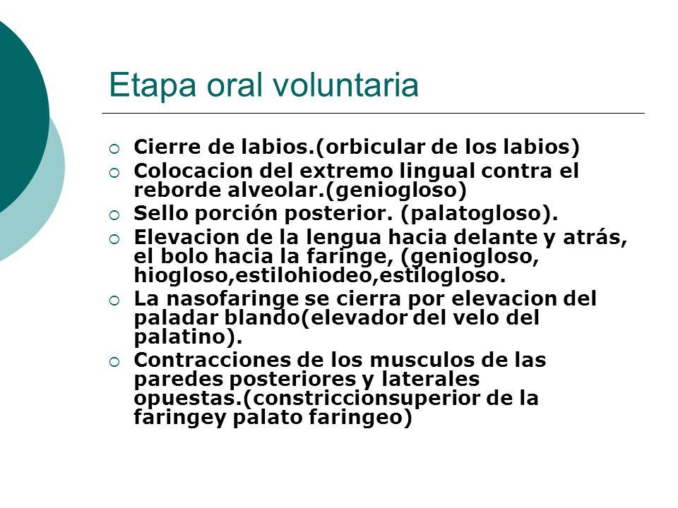Etapa oral voluntaria Cierre de labios.(orbicular de los labios)