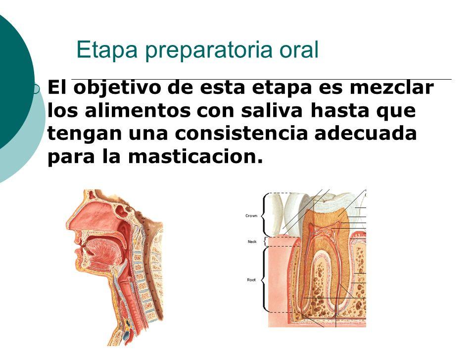 Etapa preparatoria oral