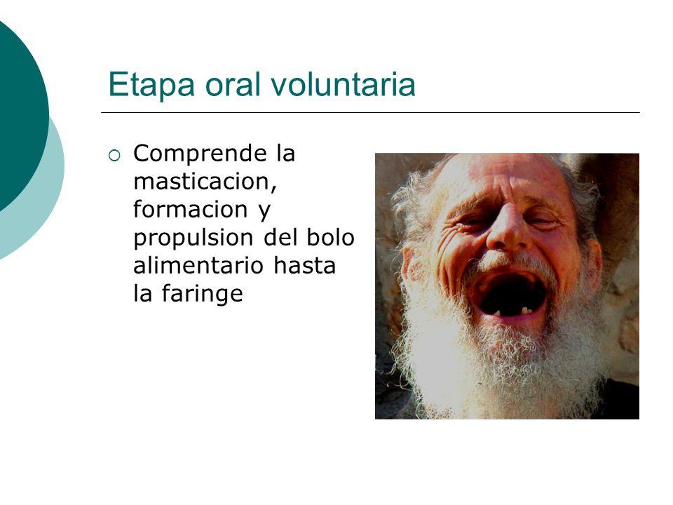 Etapa oral voluntaria Comprende la masticacion, formacion y propulsion del bolo alimentario hasta la faringe.