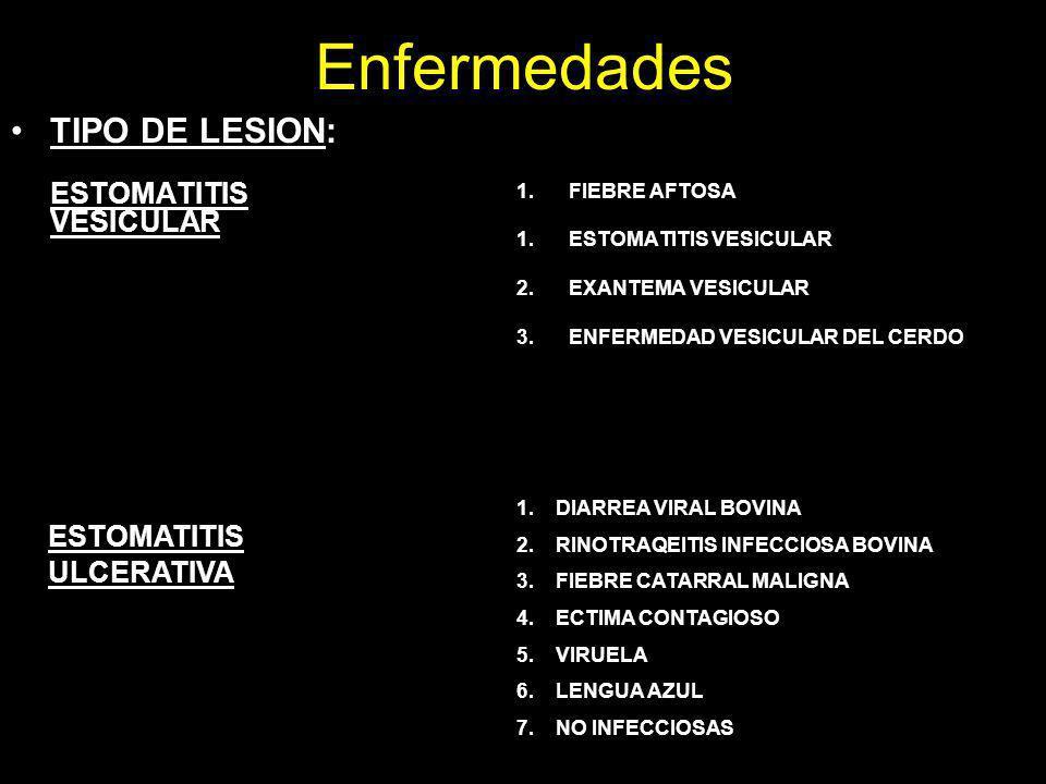 Enfermedades TIPO DE LESION: ESTOMATITIS ULCERATIVA FIEBRE AFTOSA