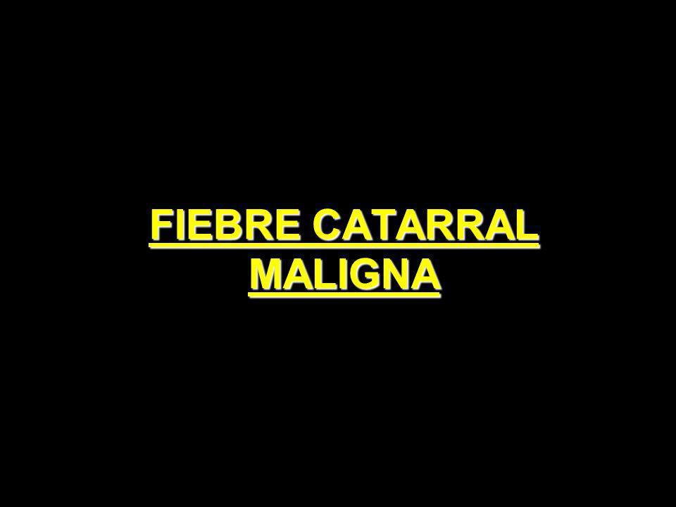 FIEBRE CATARRAL MALIGNA