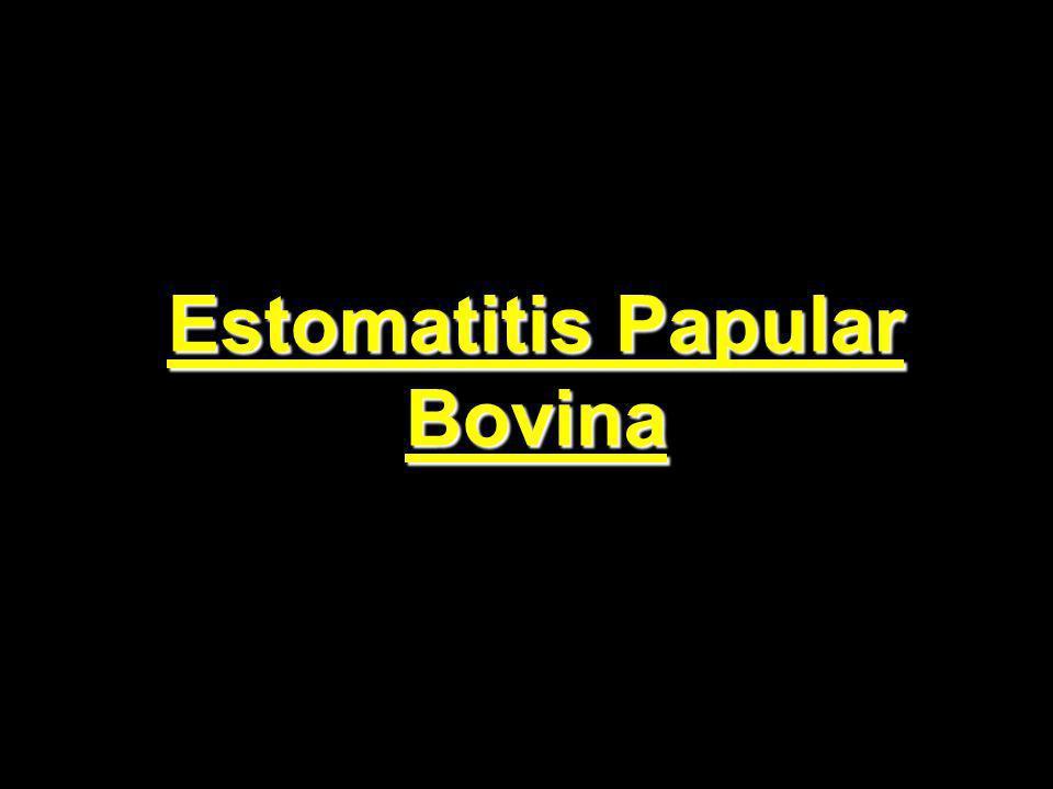 Estomatitis Papular Bovina