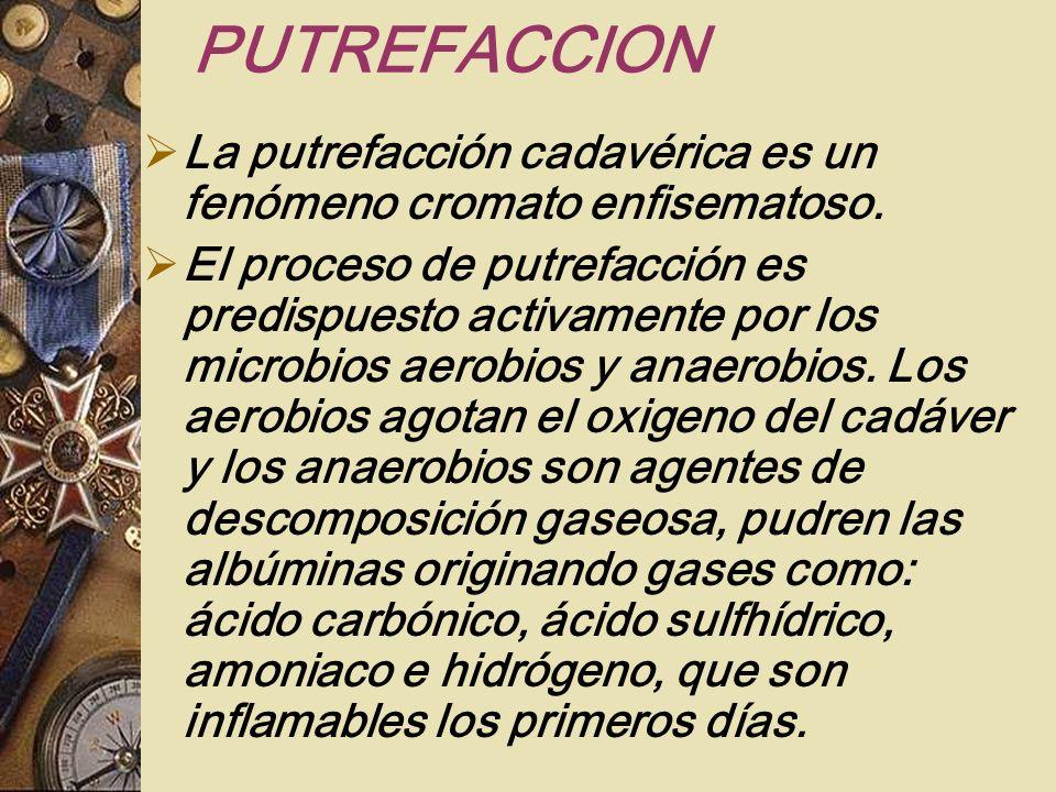 PUTREFACCIONLa putrefacción cadavérica es un fenómeno cromato enfisematoso.