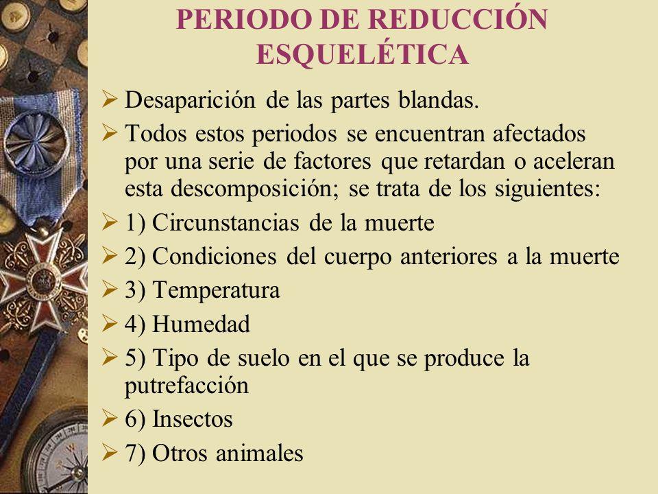 PERIODO DE REDUCCIÓN ESQUELÉTICA