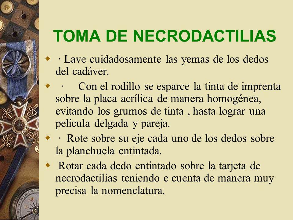 TOMA DE NECRODACTILIAS