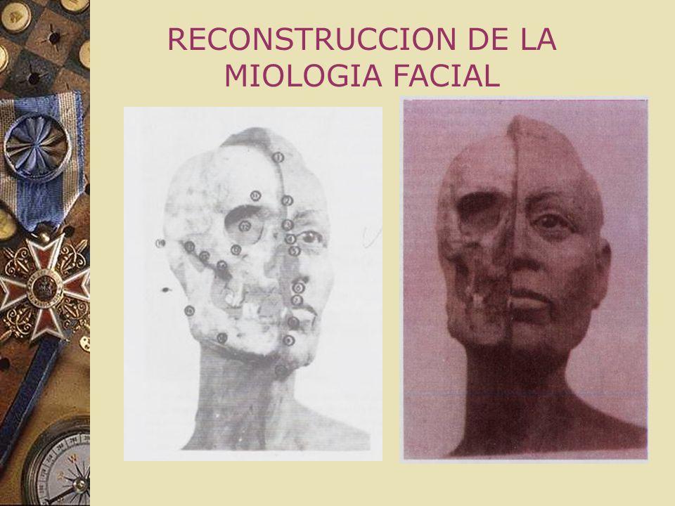 RECONSTRUCCION DE LA MIOLOGIA FACIAL