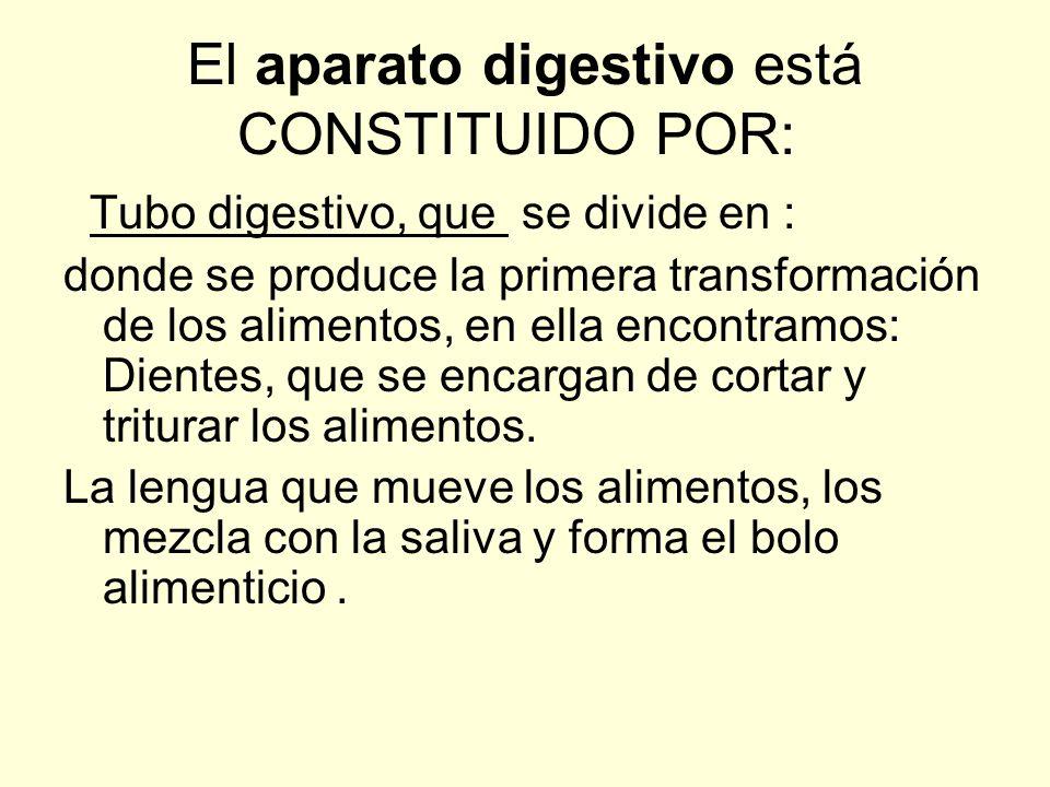 El aparato digestivo está CONSTITUIDO POR: