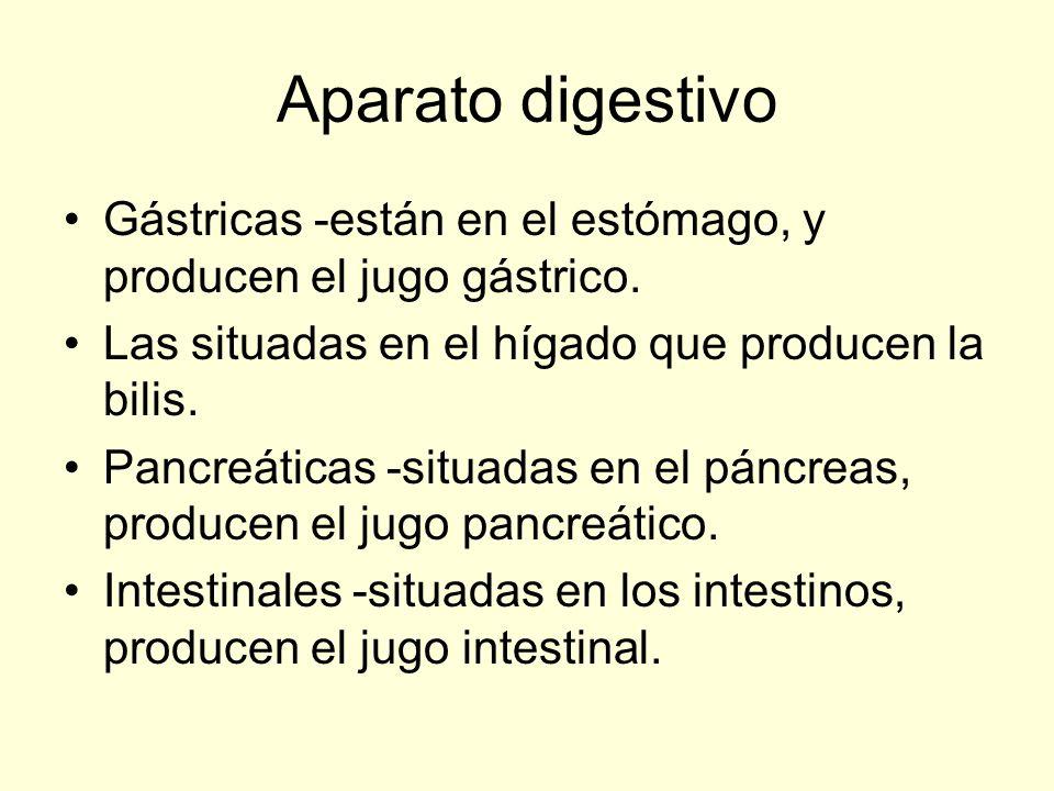 Aparato digestivo Gástricas -están en el estómago, y producen el jugo gástrico. Las situadas en el hígado que producen la bilis.