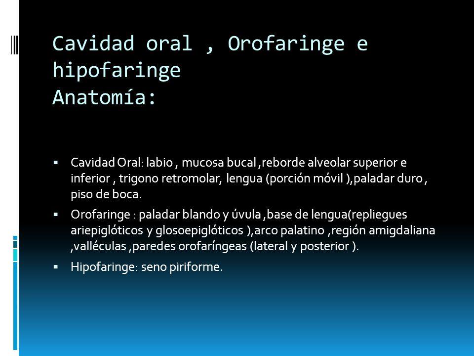 Cavidad oral , Orofaringe e hipofaringe Anatomía: