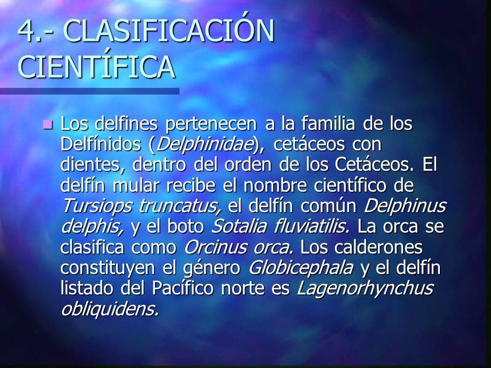 4.- CLASIFICACIÓN CIENTÍFICA
