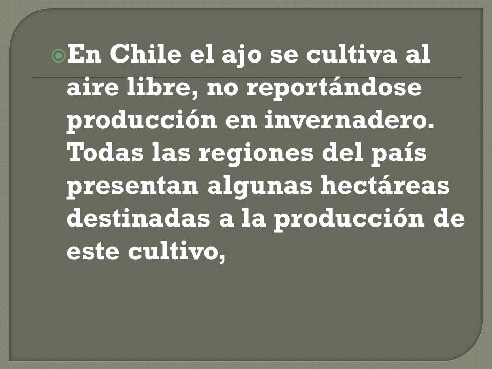 En Chile el ajo se cultiva al aire libre, no reportándose producción en invernadero.
