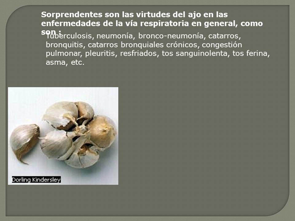 Sorprendentes son las virtudes del ajo en las enfermedades de la vía respiratoria en general, como son :