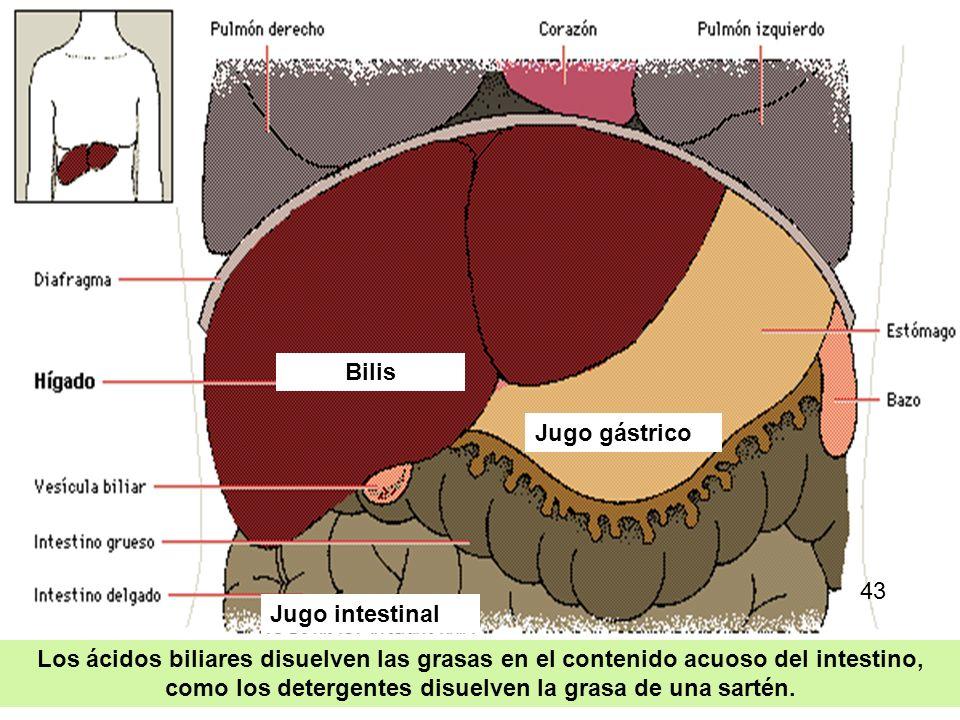 Bilis Jugo gástrico. 43. Jugo intestinal.