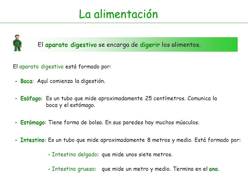 La alimentación El aparato digestivo se encarga de digerir los alimentos. El aparato digestivo está formado por: