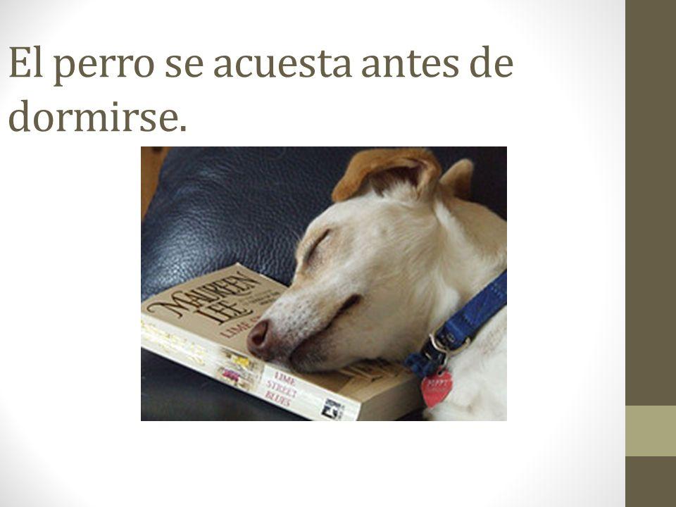 El perro se acuesta antes de dormirse.