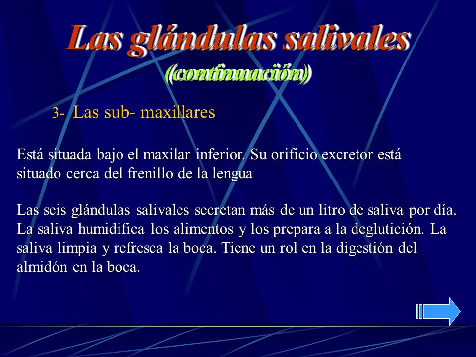 Las glándulas salivales