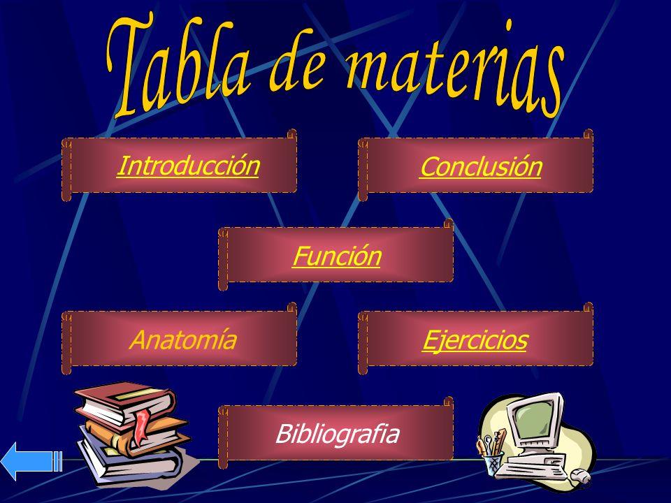 Tabla de materias Introducción Conclusión Función Anatomía Ejercicios