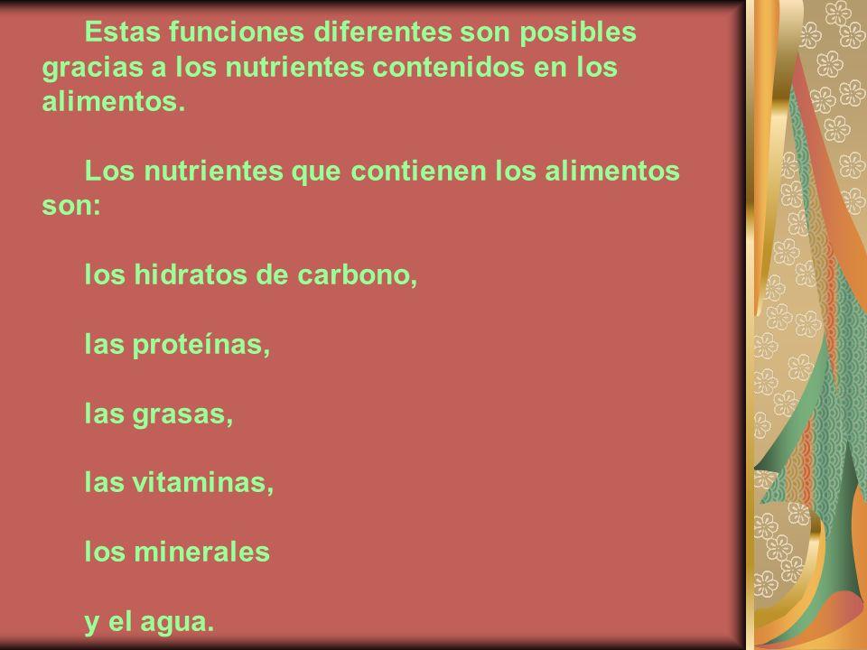 Estas funciones diferentes son posibles gracias a los nutrientes contenidos en los alimentos.