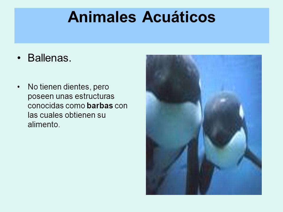 Animales Acuáticos Ballenas.