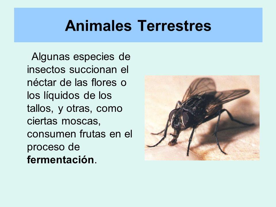 Animales Terrestres