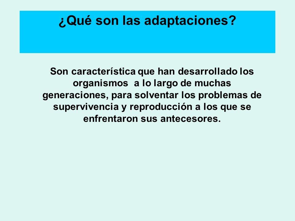 ¿Qué son las adaptaciones