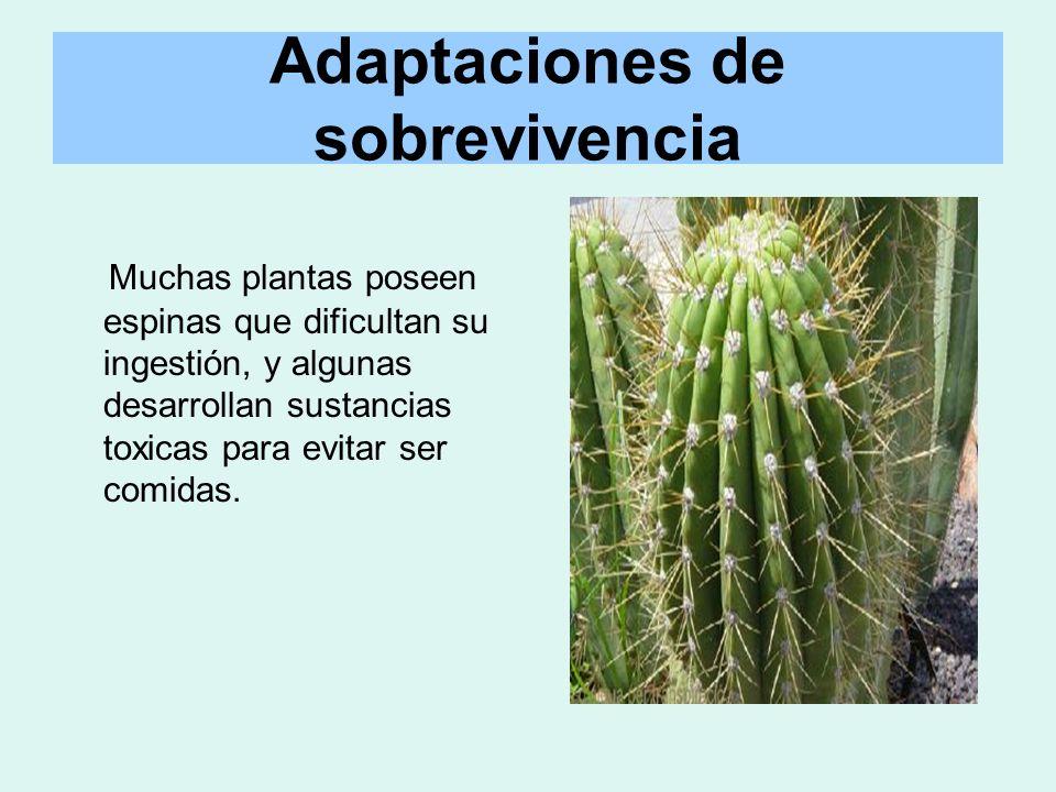 Adaptaciones de sobrevivencia