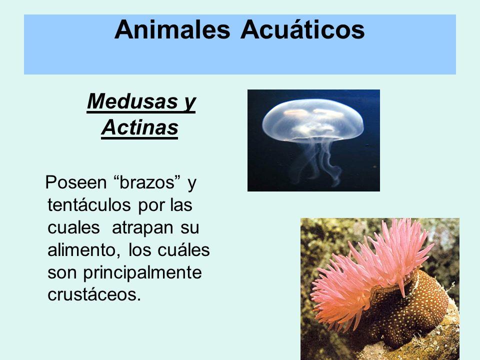 Animales Acuáticos Medusas y Actinas