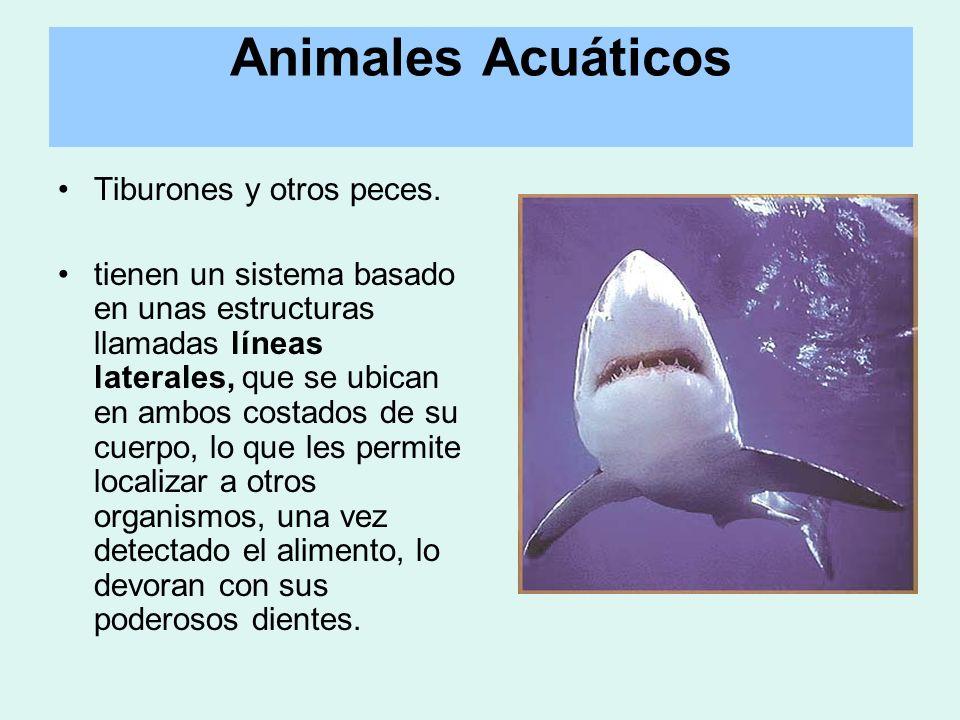 Animales Acuáticos Tiburones y otros peces.