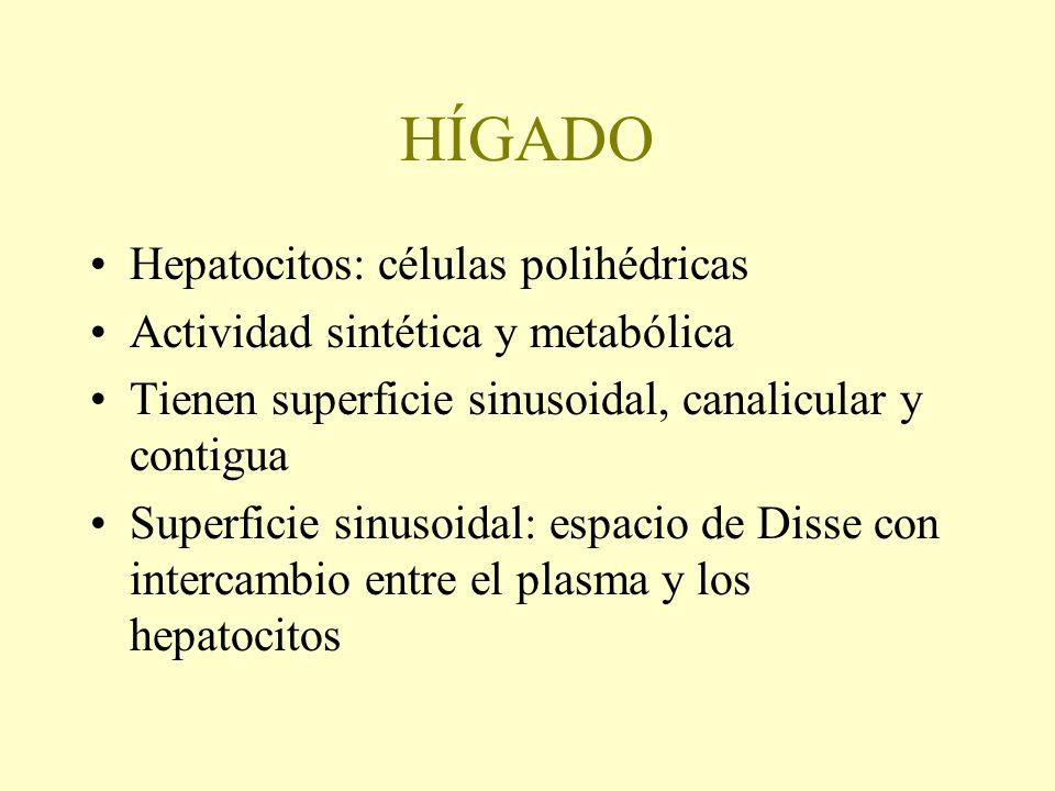 HÍGADO Hepatocitos: células polihédricas