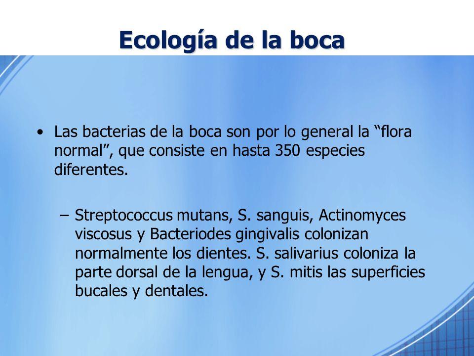 Ecología de la boca Las bacterias de la boca son por lo general la flora normal , que consiste en hasta 350 especies diferentes.